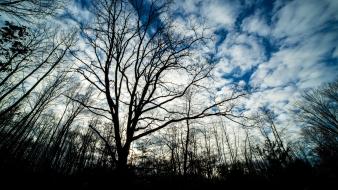 Tree Silhouette near Cadillac, Michigan