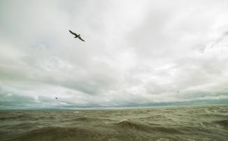 Bird Flying over Lake Michigan